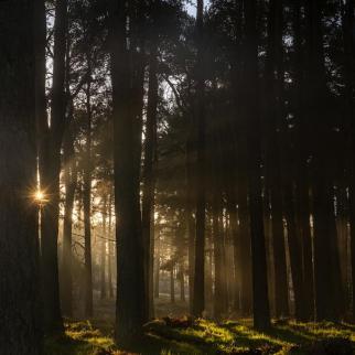 Photograph Sunrays Through Trees