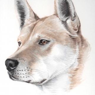 Watercolour - regal dog Asia