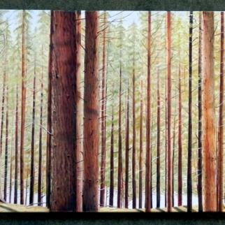 Looking at the play of light through the straight lines of fir tree trunks creating a pattern like a carbon bar code.