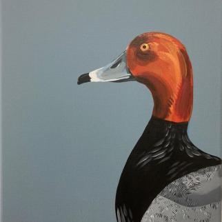 Male Pochard acrylic on canvas pjtopleyart