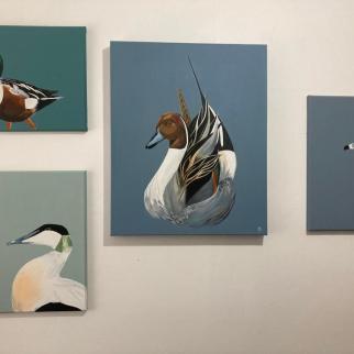 Shoveler Pochard Pintail Eider Ducks acrylic on canvas pjtopleyart