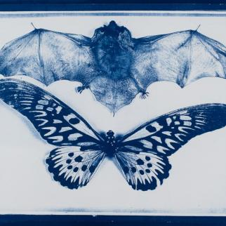 cyanotype of bat and butterfly on paper