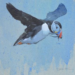 Puffin Returning watercolour on paper
