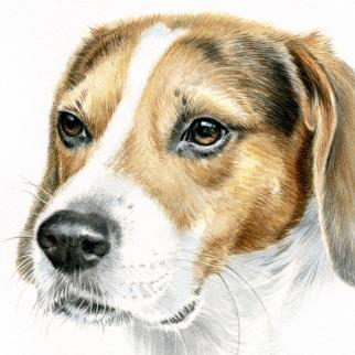 Watercolour - proud dog Stanley