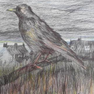 Landscape with crow. Watching Crow - biro and watercolour 15x16cm