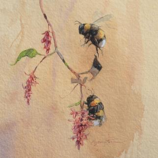 Bumble bees watercolour
