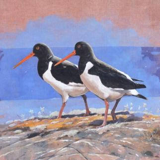 Oystercatchers gouache on linen